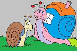 Snail Timer