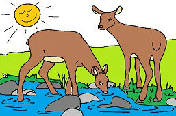 Deers in the creek