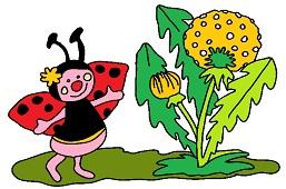 Ladybug and dandelion