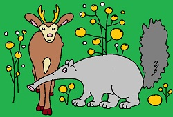 Anteater and deer