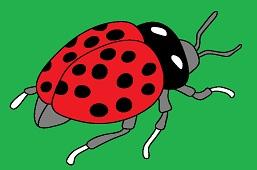 Live ladybug
