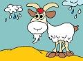 Billy-goat