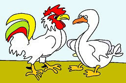 Rooster and white goose