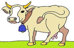 Domestic Cow