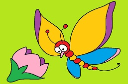 Butterfly Oliver
