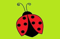 Small Ladybug