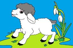 Lamb and snowdrops