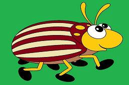 Beetle Max