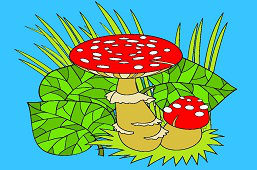 Toadstools in the grass